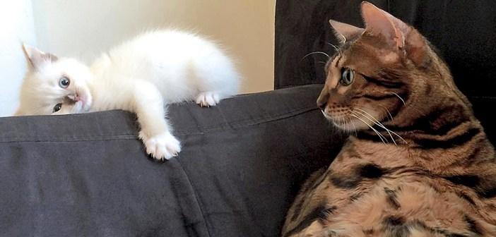 子猫を見つめる猫