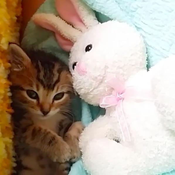 ぬいぐるみと子猫