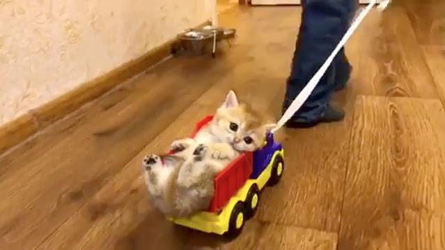 運ばれる子猫