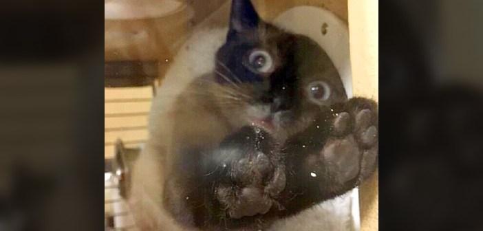 猛アピールする猫