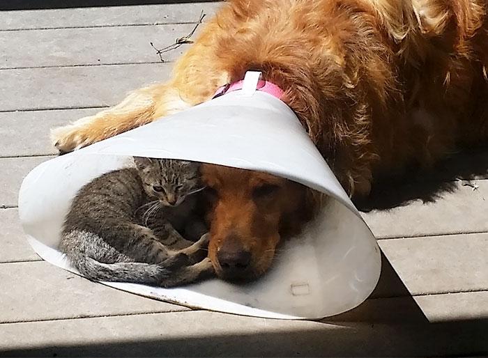 犬のエリザベスカラーと子猫