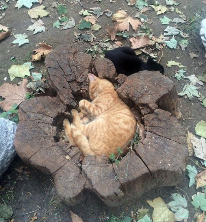 切り株で眠る猫