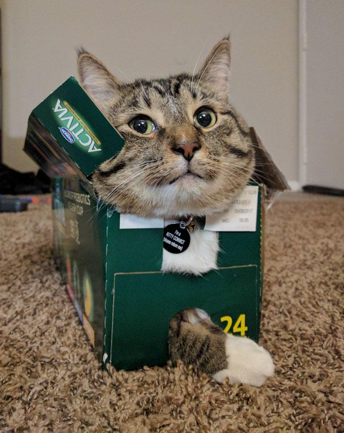 箱の中で幸せそうな猫