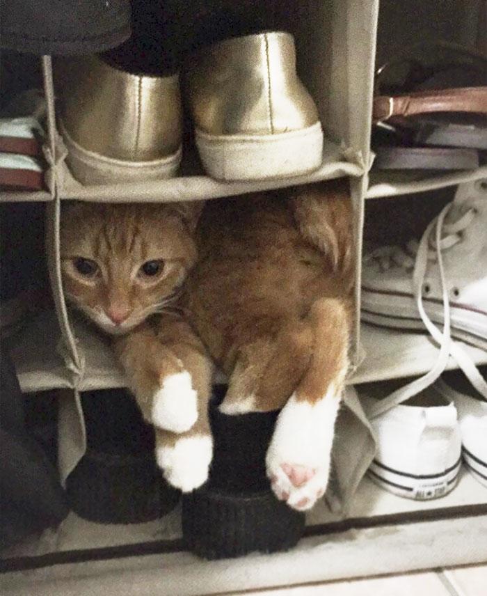 靴箱は猫のベッド