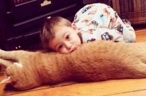 猫と男の子
