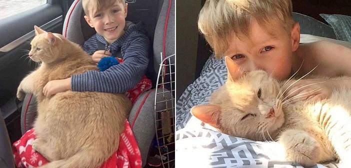 仲良しな猫と男の子