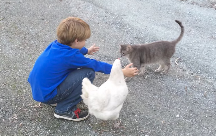 男の子に近づく猫