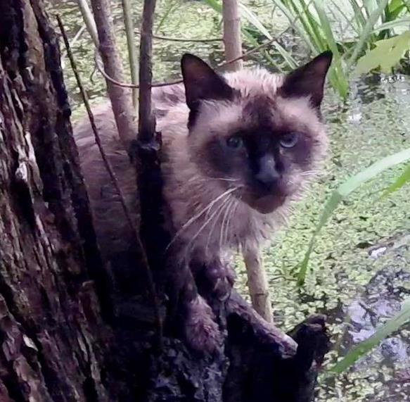 救助を待つ猫