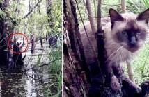 木の上に取り残された猫