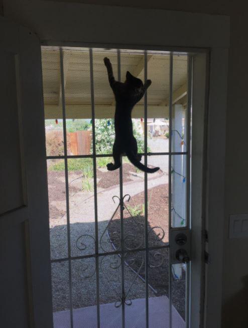 しがみつく猫