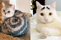 不思議な柄の猫