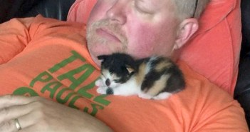 男性と子猫