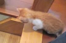 階段に取り残された子猫