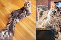 シッポの長い猫
