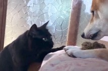 朝に強い猫と朝に弱い犬