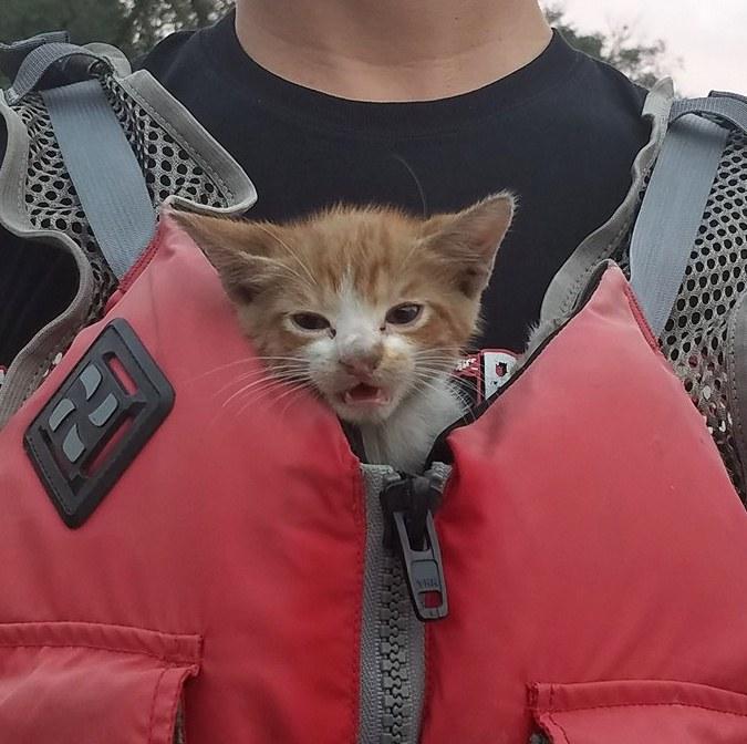 安心した子猫