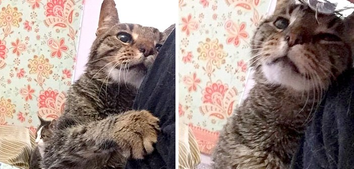 16歳の老猫