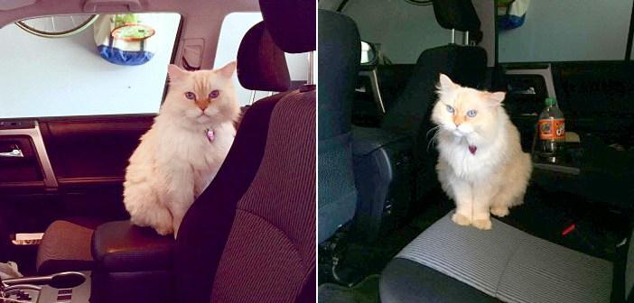 17年間一緒だった愛猫を失った女性。その直後から隣の猫が家に来るようになって… 愛らしい姿で元気づけてくれた (3枚)