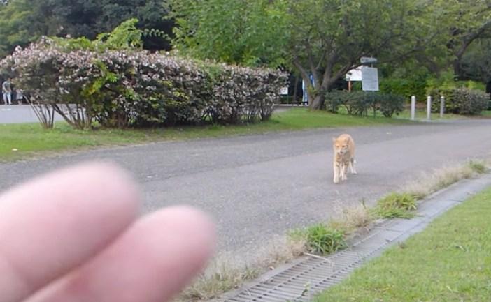 遠くの猫を手招きする男性