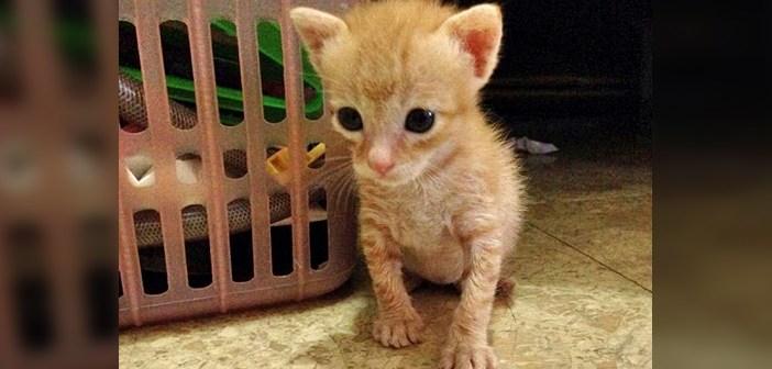 市場で出会った子猫
