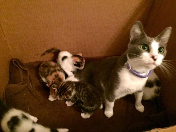 見上げるは母猫