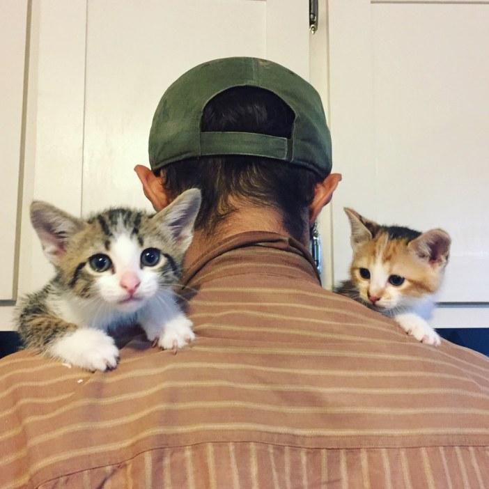 肩の乗る子猫達