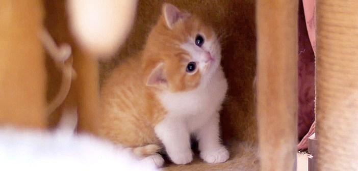 ミルクを飲まない子猫