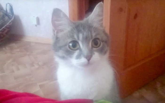 子猫を見て欲しい猫