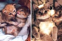 庭で保護された2匹の子猫