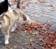 公園で近づいてきた猫