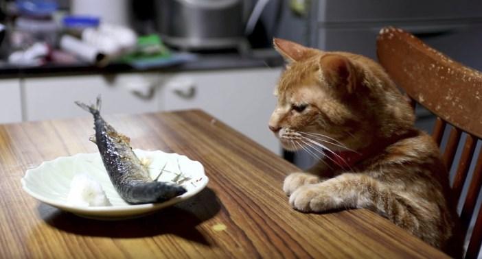 秋刀魚と猫