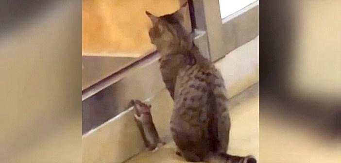 サンドイッチ屋さんの前で、一緒におこぼれを待つ猫とネズミ。とっても仲良しな2匹の姿に思わずビックリ (ㆁωㆁ)!