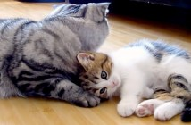 子猫と先輩猫
