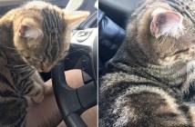 車に乗って来た猫