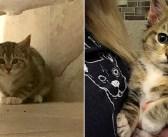 鶏小屋で3匹の子猫を見つけた女性。人間を怖がる子猫達を1週間かけて保護すると… 子猫達に嬉しい変化が♪ (7枚)