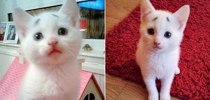 心配顔の子猫