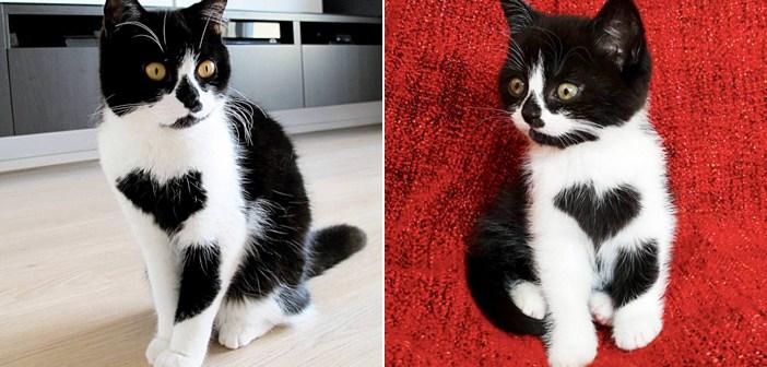 偶然、胸にハートマークのある子猫を発見! 家に迎え入れると… 驚くほど幸せいっぱいに (〃∇〃)! 7枚