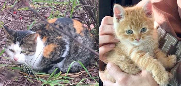 排水口に落ちた子猫を救う