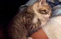 ハグ好きの子猫