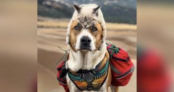 冒険好きの犬と猫