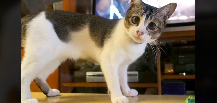 目の大きな猫