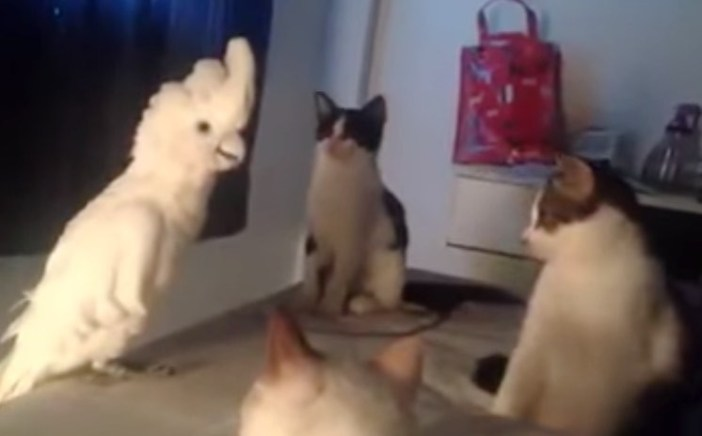 オウムと猫