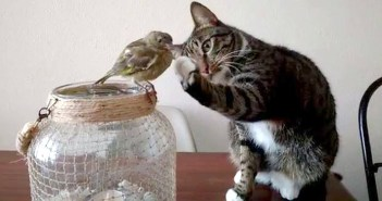 鳥を触ろうとする猫