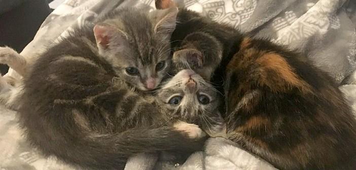 庭のポーチの下で、病気の弟を守っていた2匹の姉猫。暖かい家に迎えられると… 幸せそうな姿を見せてくれた♪ (9枚)