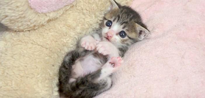 丸くなる子猫