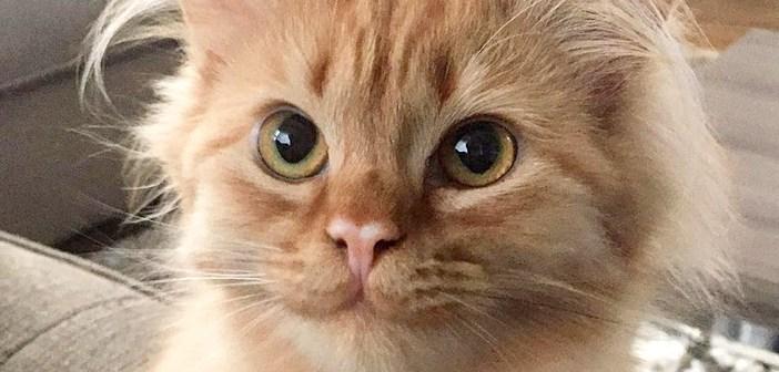 笑顔が止まらなくなった子猫