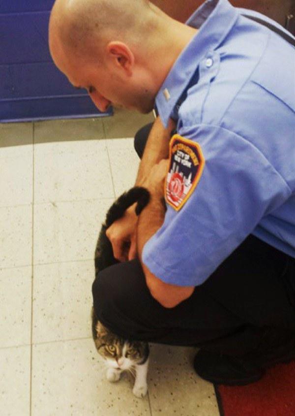消防士と猫