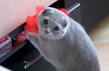 イタズラがバレた猫