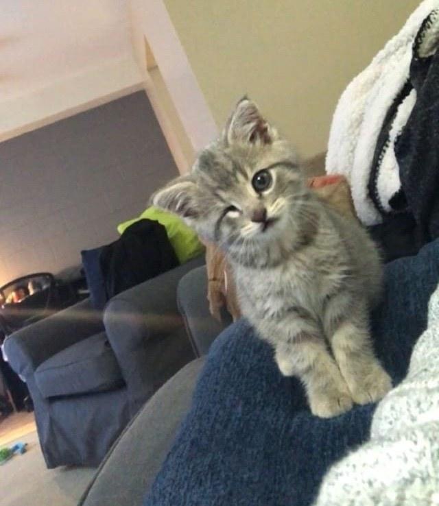 ウインク子猫