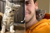 片目の子猫